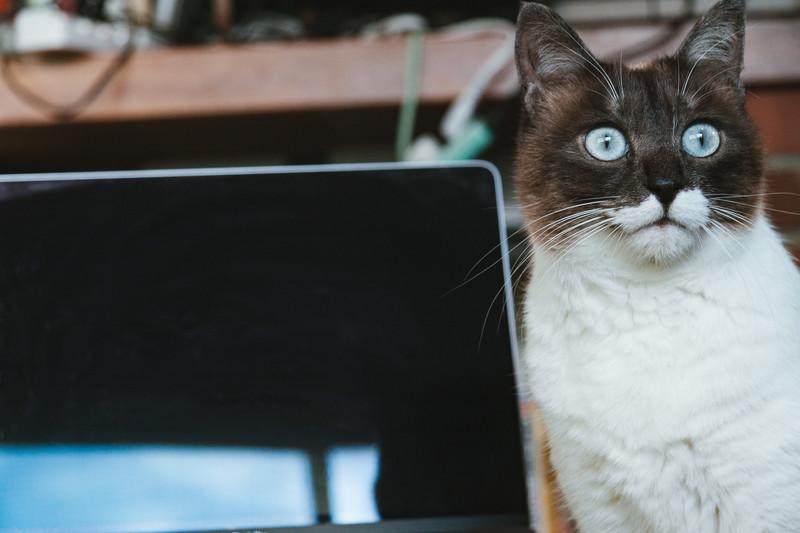 猫がユーデミーで勉強